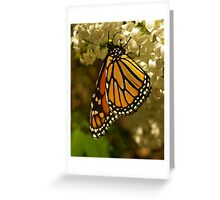 """""""Emperor Butterfly  at Lake Coogee Reserve"""" Greeting Card"""