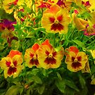 Pansies in the Morning Sun by Diane Schuster