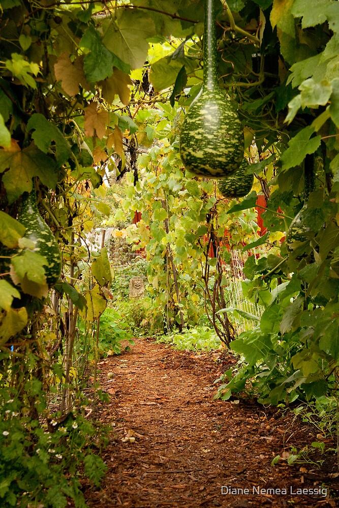 Gourd arbor in full fruit by Diane Nemea Laessig