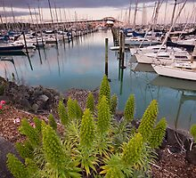 Westhaven Marina by Chris Gin