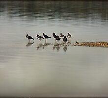 ~ Oyster Catchers ~ by Lynda Heins