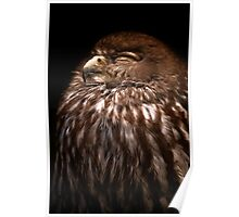 the Barking Owl Poster
