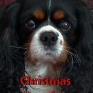 Happy Christmas from Charlotte Rose (Charlie) by AnnDixon