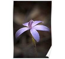 """Little Blue Native Orchid"" Poster"