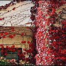 Autumn colours # 5 - The secret  window  by Daniela Cifarelli