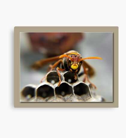 paper wasp Canvas Print