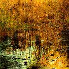 Elizabeth's Lake by Cathy  Walker