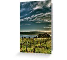 Rosevears Vineyard at Dawn - Tasmania, Australia Greeting Card