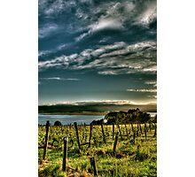 Rosevears Vineyard at Dawn - Tasmania, Australia Photographic Print