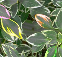 Rainbow Foliage Sticker