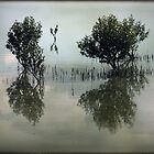 ~ Mangroves Reflected ~ by Lynda Heins