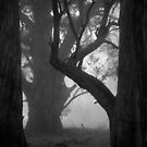 Scary Trees- East Morialta by Ben Loveday