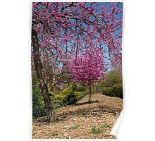 Spring, Oklahoma City, Oklahoma, March 2010 Poster