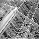 Scaffolding - City Hall - Philadelphia 2 by nickchic