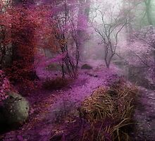 Purple Haze by Naturespeaks