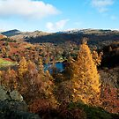 Overlooking Rydal Water II by bubblebat