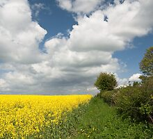Spring Scenery by photontrappist