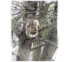 Cozy Up in a Tree! Poster
