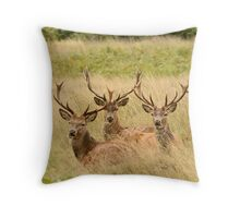 Three young Red Deer Stags laying in grass Throw Pillow