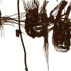 Blur no. 10 by Jeffrey Rowekamp