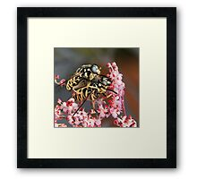 Double the pleasure, double the fun! Framed Print