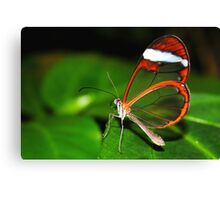 Glasswing - Greta Oto Canvas Print