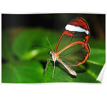 Glasswing - Greta Oto Poster