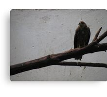 Born to be free Canvas Print