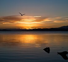 Soaring into the night by CezB