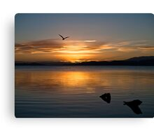 Soaring into the night Canvas Print