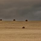Harvest landscape by Erika Gouws