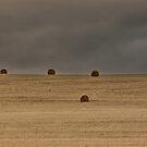 Harvest landscape by Erika Gouws