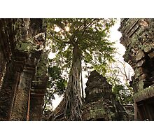 Strangler Figs & Ruins - Ta Prohm, Cambodia Photographic Print