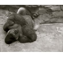 Gorilla Relaxing with his feet crossed Photographic Print