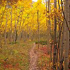 Heavenly Autumn Trail by Reese Ferrier