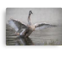 ...and fly away. Canvas Print