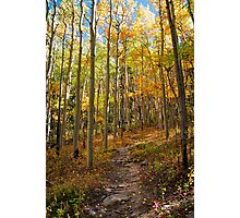 Colorful Fall Trail Photographic Print