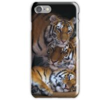 Amba, Tula, and Nuri - A Tiger Family iPhone Case/Skin