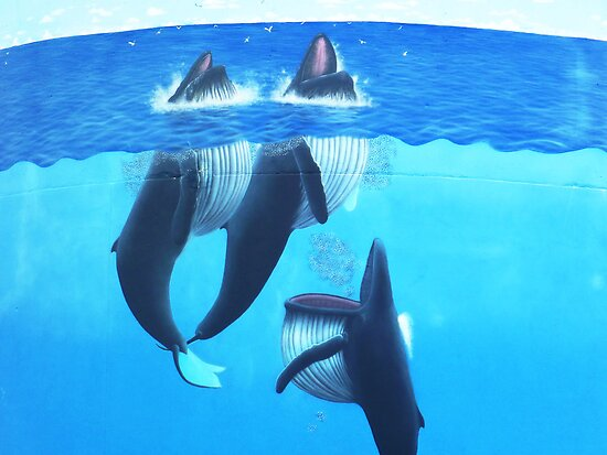 """""""Woopi Whales' by debsphotos"""