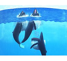 """""""Woopi Whales' Photographic Print"""