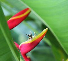 'Secrets in the Garden' by Dave Ellem