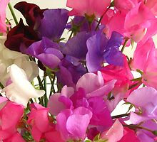 Sweet Pea Flowers by AKASHA-ROSE EMMANUEL