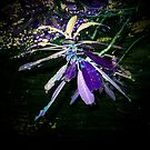 purple pixie by Sandra Hopko