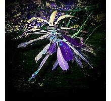 purple pixie Photographic Print