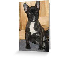 Pug French Bulldog Puppy Greeting Card