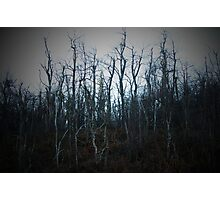 Dying Trees Photographic Print