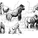 Gorillas by David  Kennett