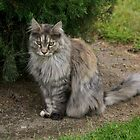 Pet cat, Saint Mary's Convent, Blenheim, NZ. by johnrf