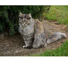 Pet cat, Saint Mary's Convent, Blenheim, NZ. Photographic Print