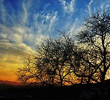Sunset and Silhouettes by Glenn McCarthy